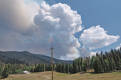 A tree falling on a power line that runs through the ranch in the Jemez Mountains ranch owned by Roger Cox is the where the Los Conchas fire, the largest fire on record in New Mexico, is believe to have started.  Clyde Mueller/The New Mexican